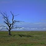 tree-2649411_1920