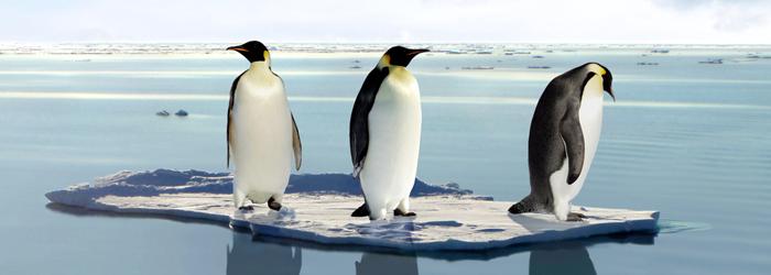 Pinguini_700x250