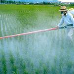 Pesticidi_316x180_10