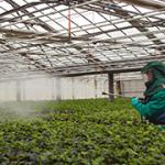 Pesticidi_316x180_36